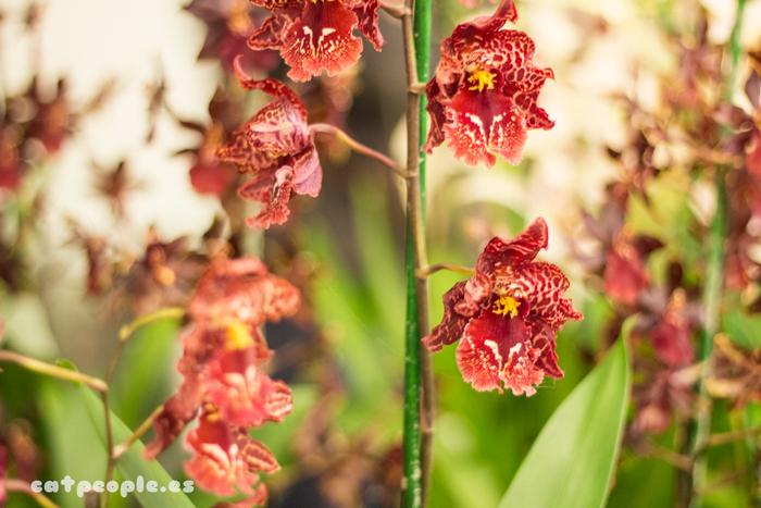 Orquídeas que parecen animales