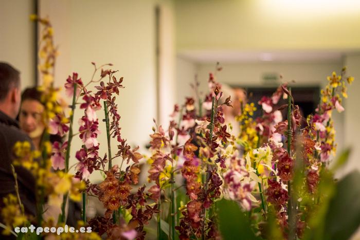 Orquídeas vista general del expositor