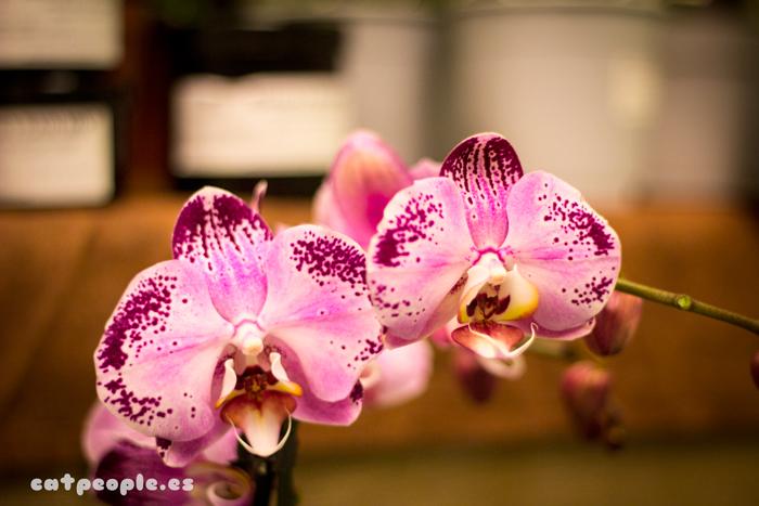 Orquídeas rosas con cara de pájaro