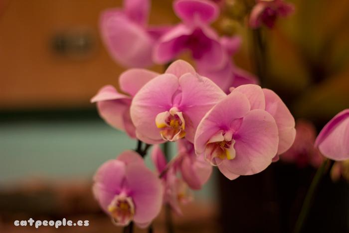 Más orquídeas rosas