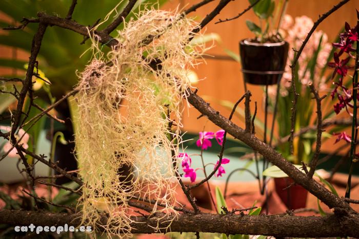 Orquídeas y otras plantas sin sustrato