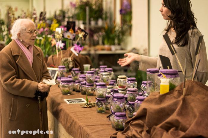Orquídeas en botecitos