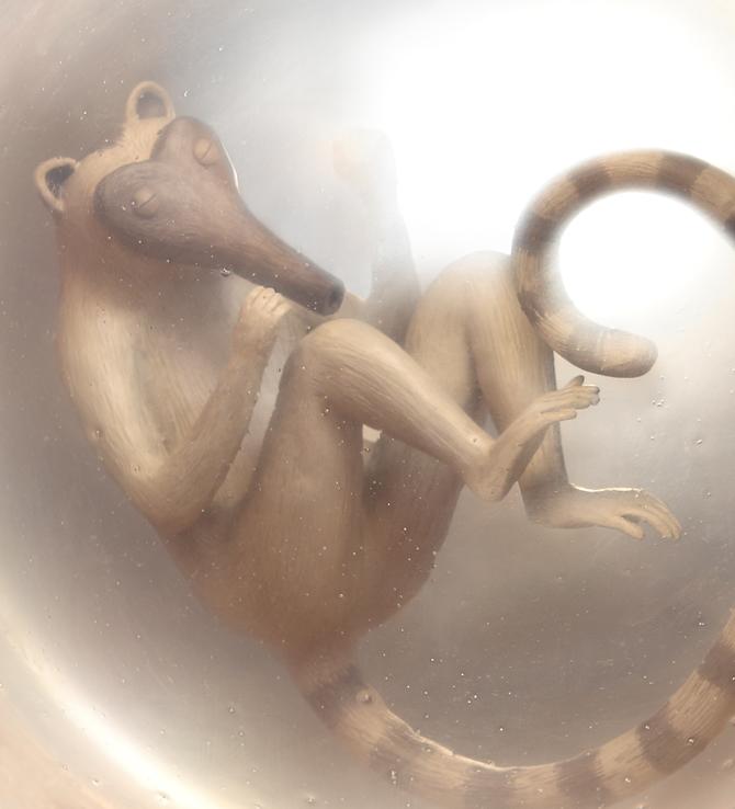 Irma Gruenholz - nacimiento animal