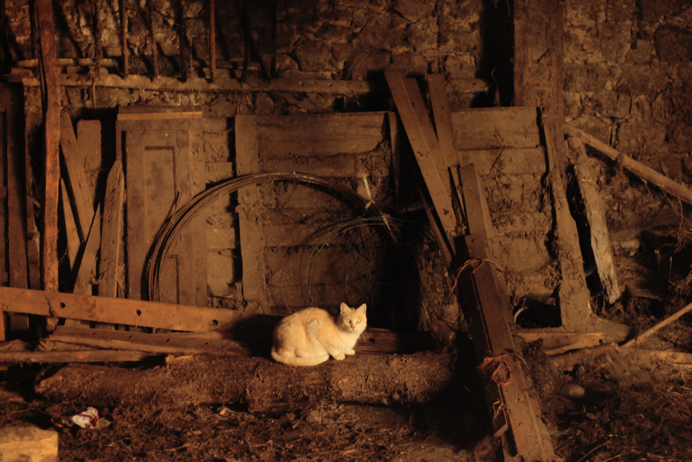Gato en Cosgaya