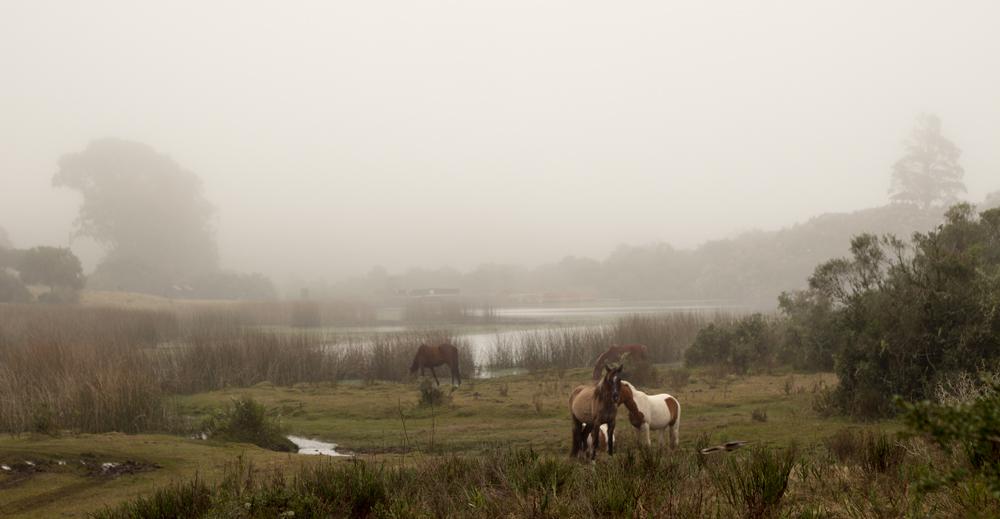 Villa Serrana en Uruguay Paisajes con Encanto y Caballos
